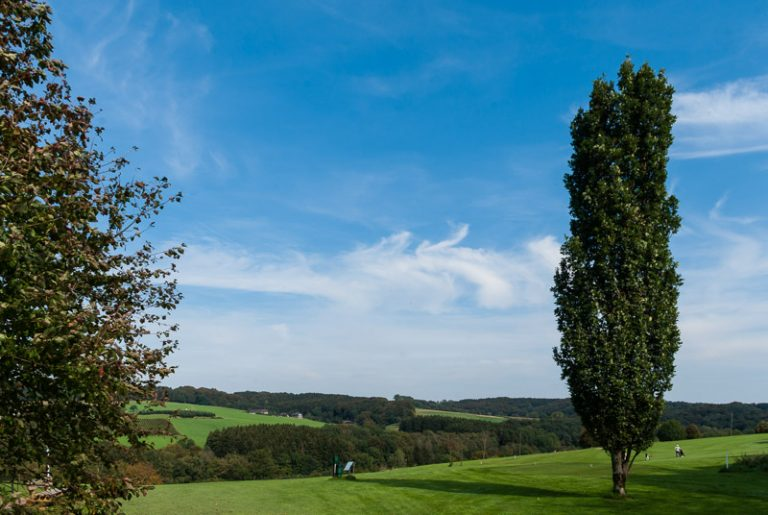 Golfbaum I