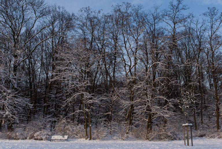winterpark-8